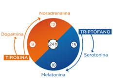 Cronobiología nutricional